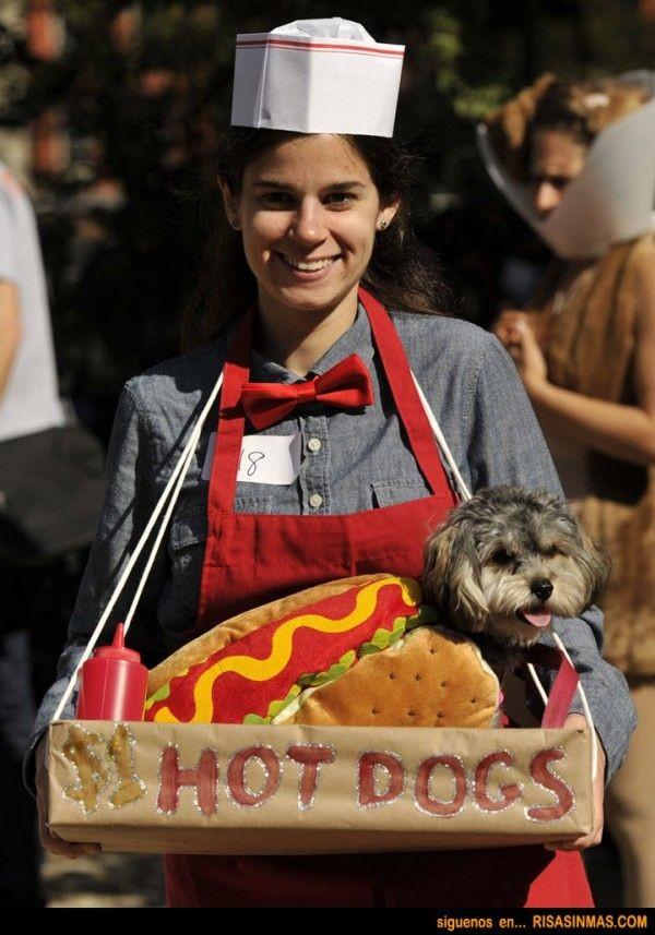 new york resume template  Disfraz de vendedor de perritos calientes   Humor e ..